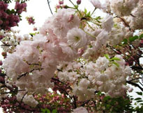 Places to view Spring Flowers in Beijing